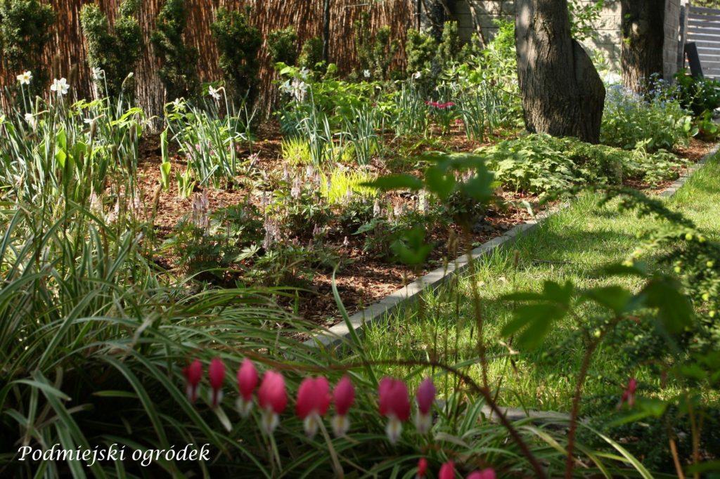 rabata leśna wczesną wiosną
