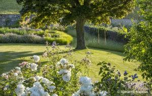 drzewo soliterowe z huśtawką; acres wild