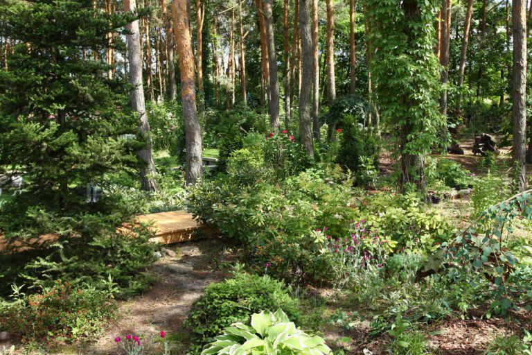 ogród Joli 13