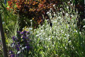 ogród Joli 25
