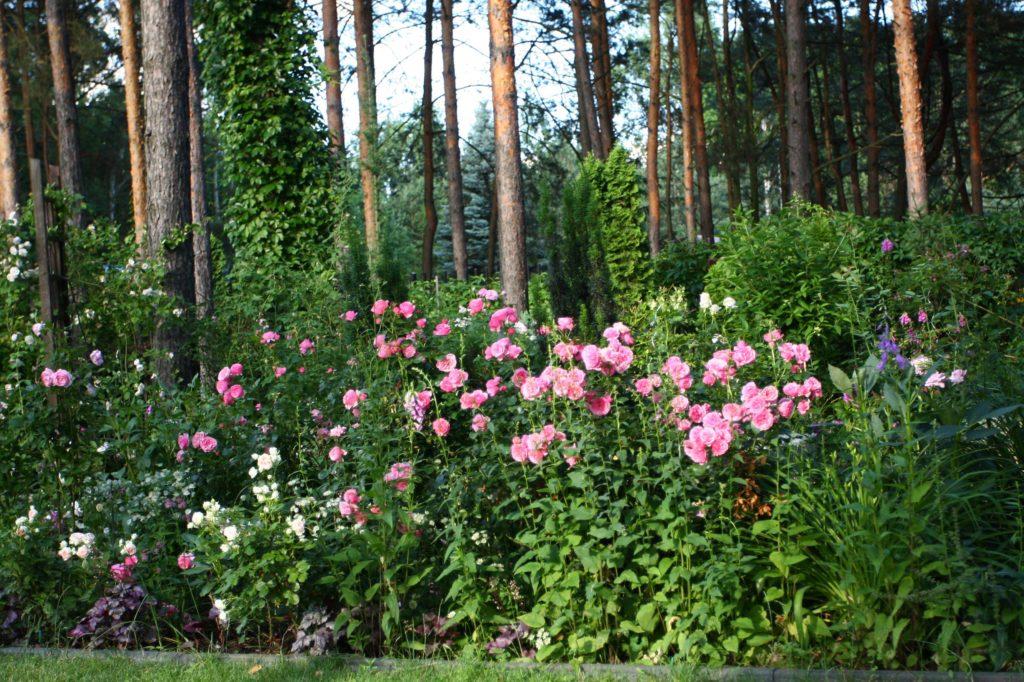 ogród Joli 27