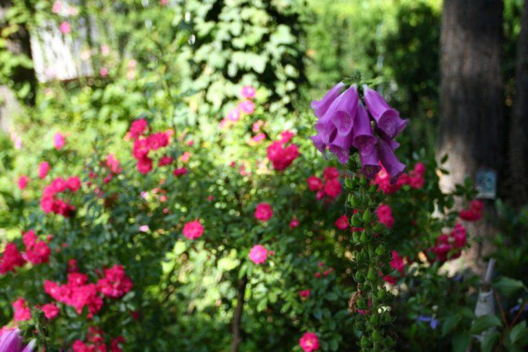 ogród Joli 30