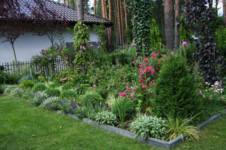 ogród Joli 5