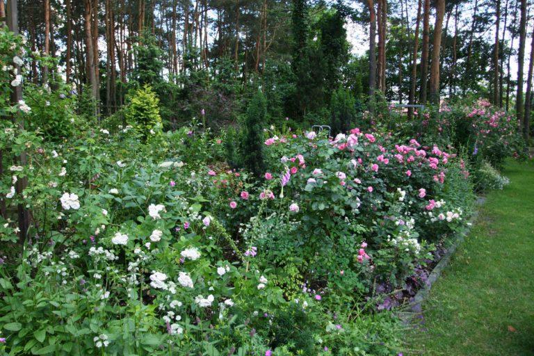 ogród Joli 8