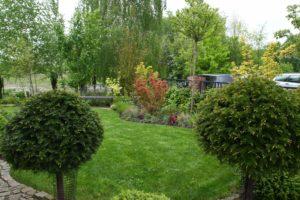 ogród Ani - przejście między cisami